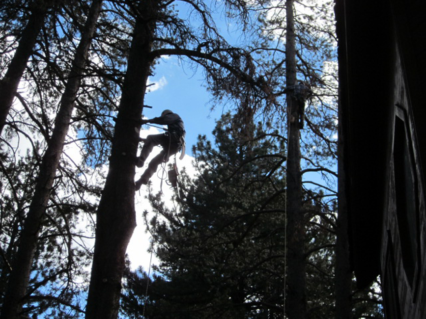 Mammoth Lakes Tree Service - Skyline Arborist