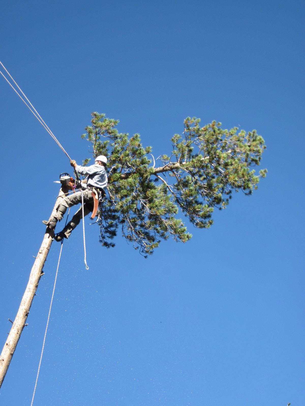 Remove dead branches