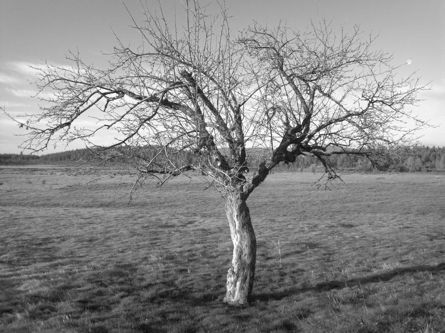 Mammoth Lakes Tree Service-Skyline Arborist