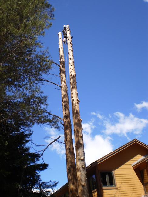 June Lake Tree Service - Certified Arborist - Mammoth Lakes