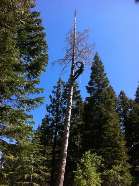 Tree Pruning-Mammoth Lakes Tree Service-Skyline Arborist