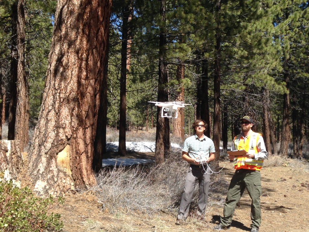 Aerial Tree Assessment Mammoth Lakes