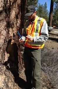 Michael McLaughlin Owner of Skyline Arborist